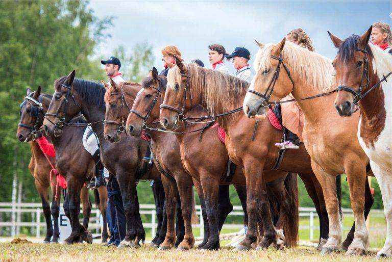 Верховая езда в усадьбе Лиелборне, развлечения