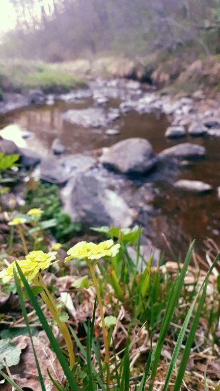 dabas taka Daugavas loki, pastaiga dabā, dabas taka parkā Latgalē