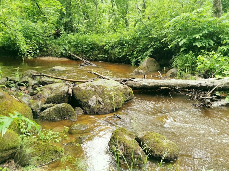 muižas parks, Latgales upe Borne, ekskursija pa Bornes upi