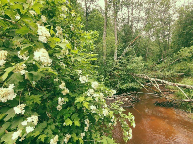 природа Латгалии, река Борне в Латгалии, экскурсия в усадьбе лиелборне